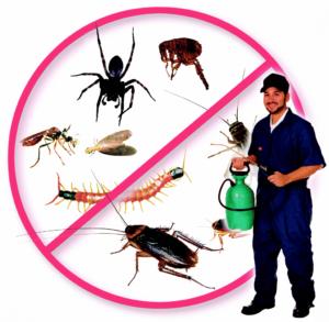 شركة مكافحة حشرات الحيرة