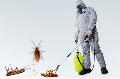 مكافحة حشرات بني ياس