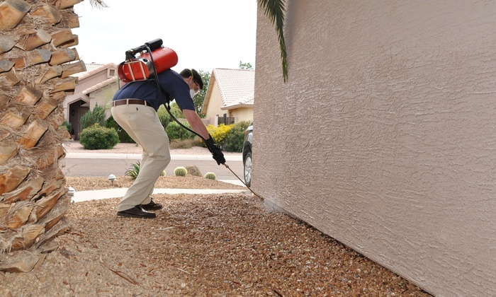 شركة مكافحة الحشرات السطوة دبي