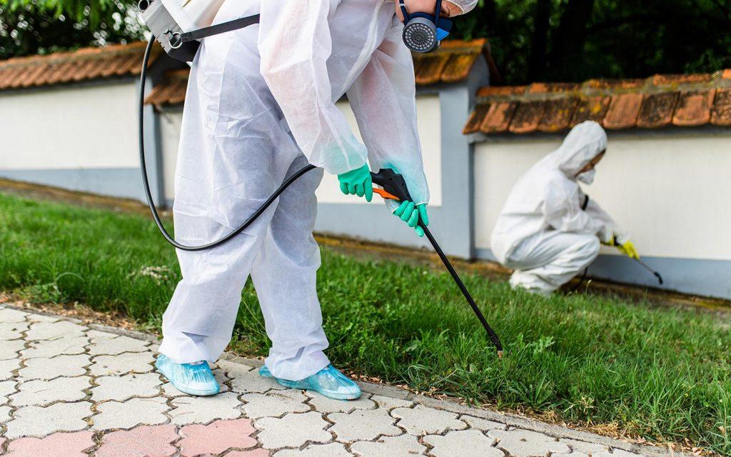 شركة مكافحة حشرات جبل علي دبي