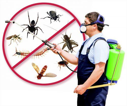 شركة مكافحة الحشرات في دبي